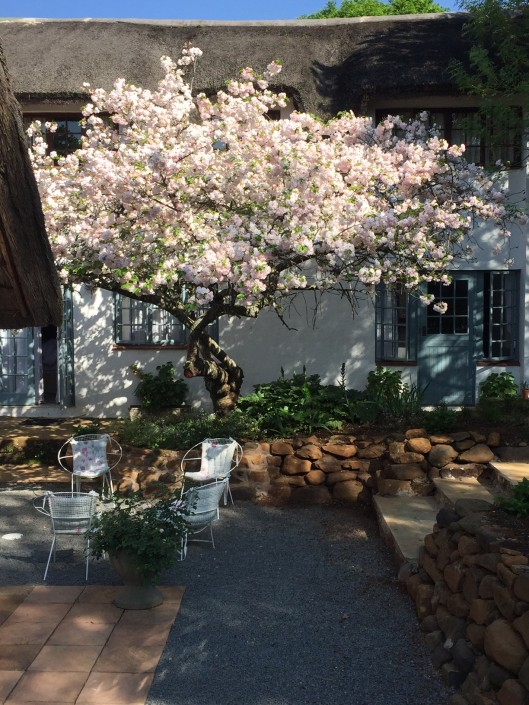 Blossom Tree in Thatch House Courtyard